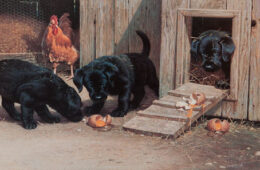 Barnyard Puppies