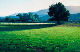 Pasture Morning