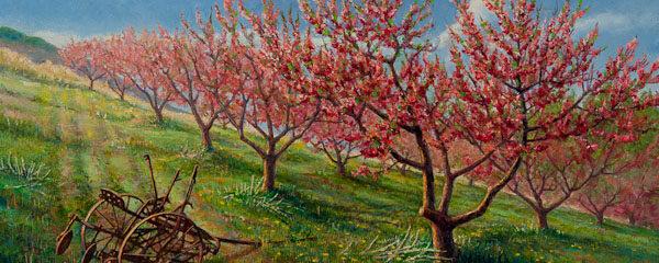 Peaches Resplendent by Garth Harrison