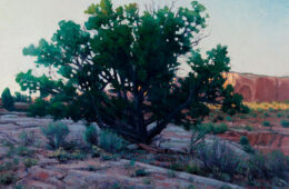 Sundown Juniper