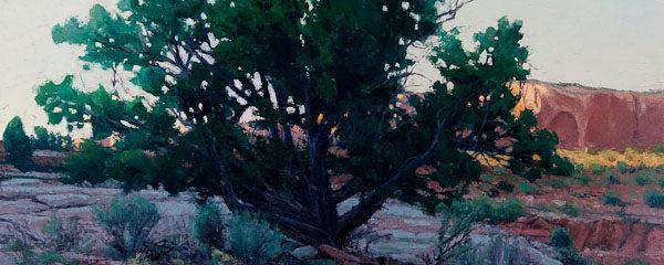 Sundown Juniper